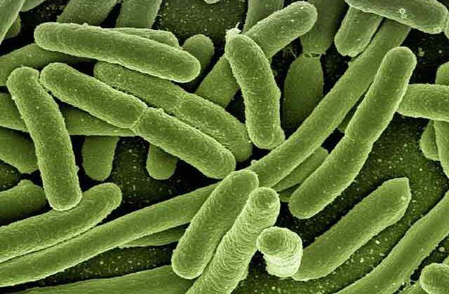 Bacterias en los cepillos de dientes